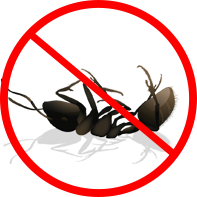 dead-ant-1