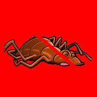 dead-bedbug
