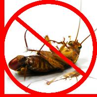 dead-roach
