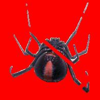 dead-spider